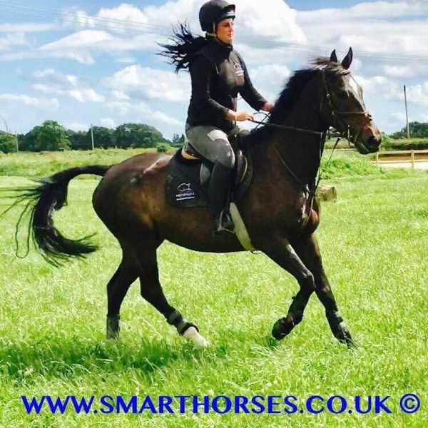 Sales / Schooling Livery