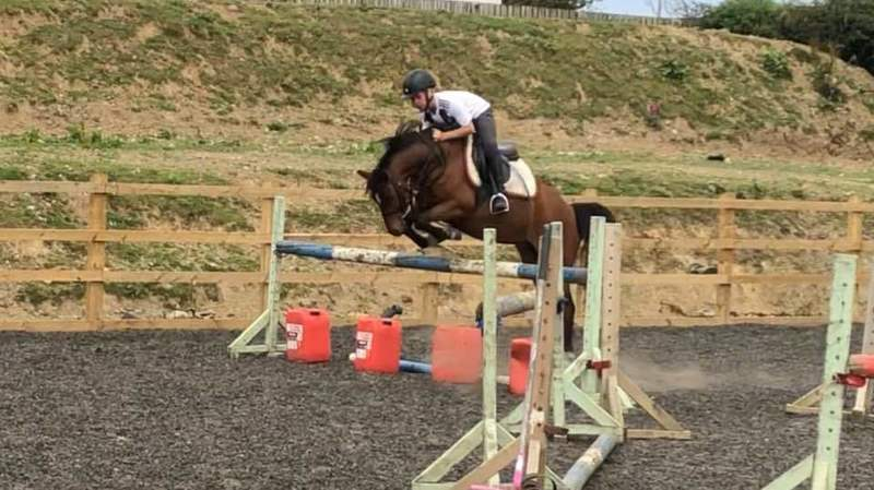ON TRIAL              SOLD SOLD SOLD  Under 10's / Stepping Stones Pony