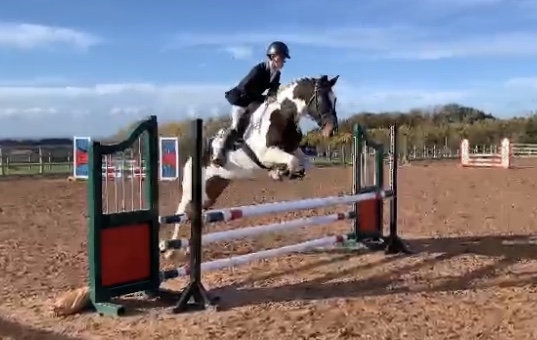 Attractive 15.3hh grassroots Eventer/allrounder
