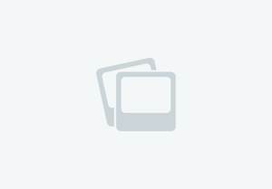Cash - 4 year old mare